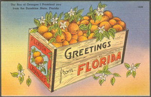 Oranges from Florida, Slim pickings for WPS players in Europe, Suarez fallout, more news