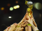 KYW Philly Soccer Show: US wins the Women's World Cup